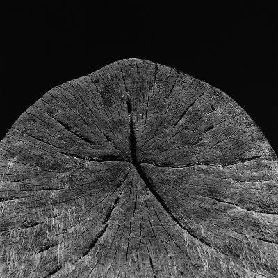 Natural Fragment-Chris Simpson-Giclee Print