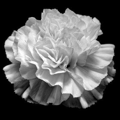 https://imgc.artprintimages.com/img/print/natural-geometry-ii-photography_u-l-q1h3pqg0.jpg?p=0