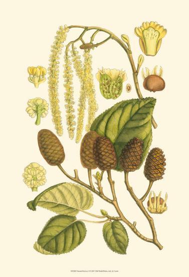 Natural Harvest I-Samuel Curtis-Art Print