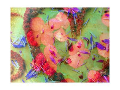 Natural Heart Close Up-Alaya Gadeh-Art Print