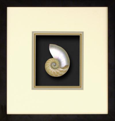 Natural Nautilus II