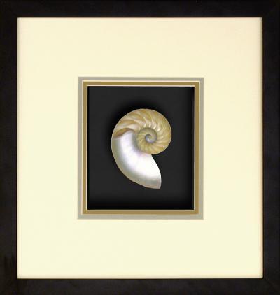 Natural Nautilus III--Dimensional Product