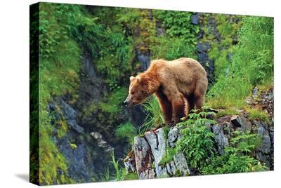 Natural Splendors Alaska 1--Stretched Canvas Print