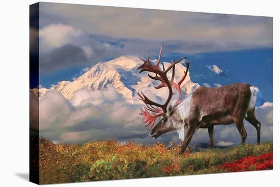 Natural Splendors Alaska II--Stretched Canvas Print
