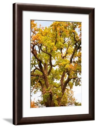 Natural Wonder-Philippe Sainte-Laudy-Framed Photographic Print