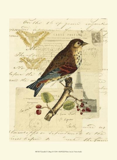 Naturalist's Collage II--Art Print