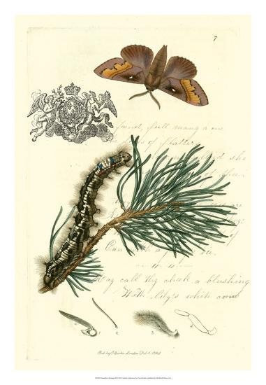 Naturalist's Montage III-Vision Studio-Giclee Print
