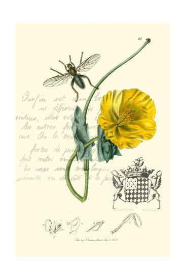 Naturalist's Montage VI-Vision Studio-Art Print