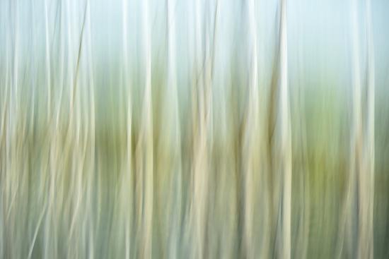 Nature Abstract, Celery Bog Wetlands, West Lafayette, Indiana-Rona Schwarz-Photographic Print