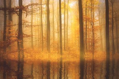 Nature Is Magic-Philippe Sainte-Laudy-Photographic Print