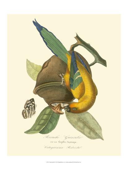 Nature Jardin IV-L. Curmer-Art Print