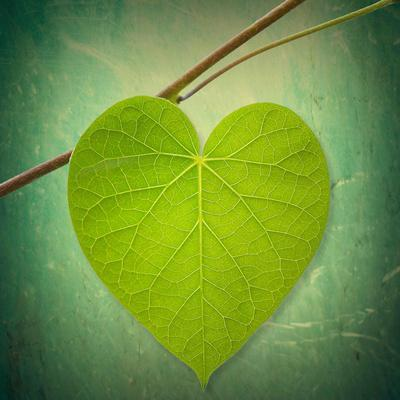 https://imgc.artprintimages.com/img/print/nature-lover_u-l-q1giw5l0.jpg?p=0
