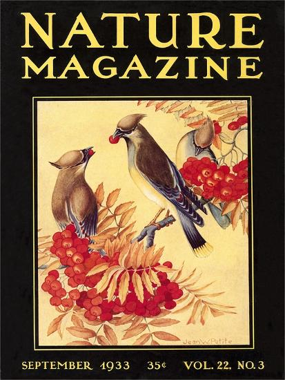 Nature Magazine Cover, Birds--Art Print