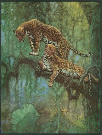 https://imgc.artprintimages.com/img/print/nature-magazine-two-leopards-in-a-tree-c-1932_u-l-q1gouk50.jpg?p=0