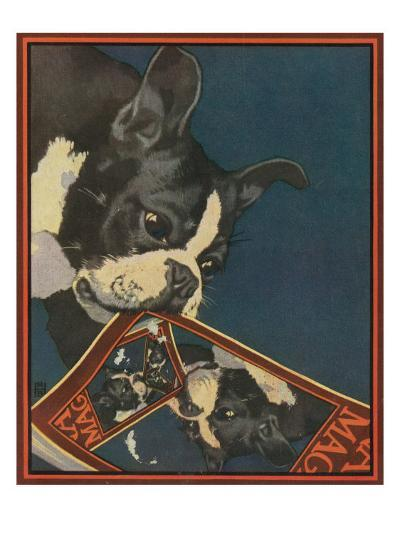 Nature Magazine - View of a Boston Terrier Tearing Up a Nature Magazine with its Picture, c.1931-Lantern Press-Art Print