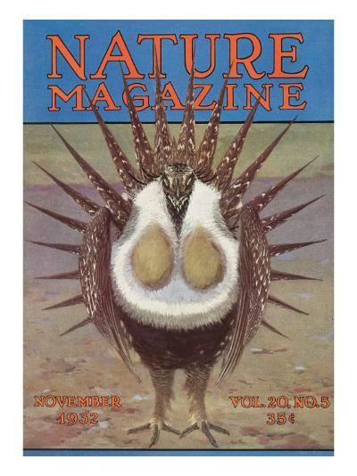 Nature Magazine - View of a Greater Sage-Grouse Bird All Puffed Up, c.1932-Lantern Press-Art Print