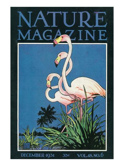Nature Magazine - View of a Pair of Flamingos, c.1931-Lantern Press-Art Print