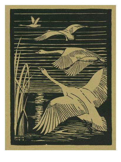 Nature Magazine - View of Swans Taking Flight, c.1938-Lantern Press-Art Print