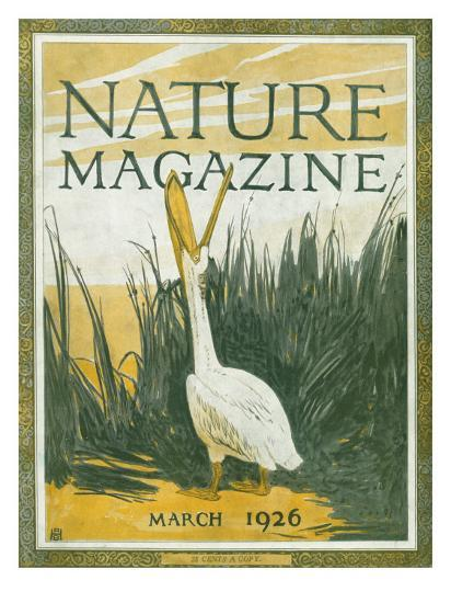 Nature Magazine - View of the American White Pelican with an Open Bill, c.1926-Lantern Press-Art Print
