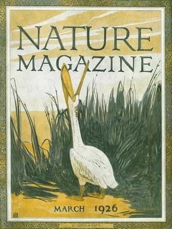 https://imgc.artprintimages.com/img/print/nature-magazine-view-of-the-american-white-pelican-with-an-open-bill-c-1926_u-l-q1gotx10.jpg?p=0