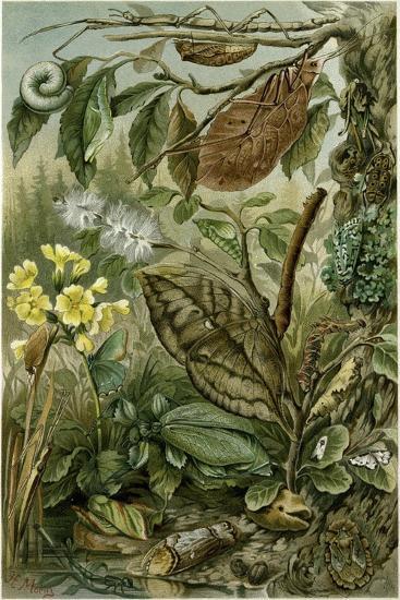 Nature Nineteenth Century Flower Leaves Tree Beetle--Giclee Print