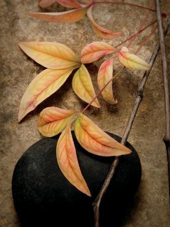 https://imgc.artprintimages.com/img/print/nature-s-balance_u-l-psyb730.jpg?p=0