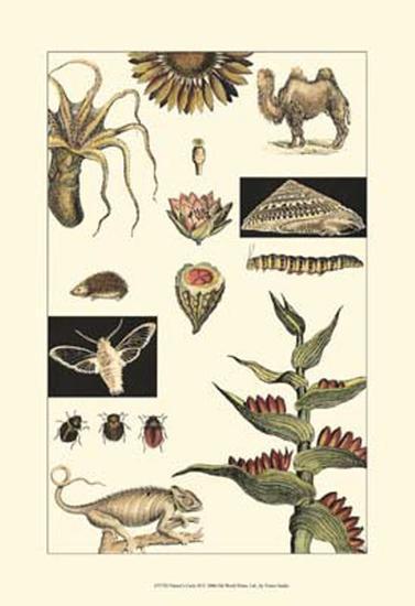 Nature's Curio III--Art Print