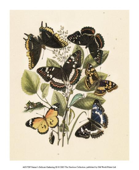 Nature's Delicate Gathering III--Art Print