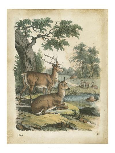 Nature's Gathering IV-John Wiek-Art Print