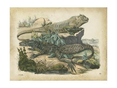 Nature's Gathering VI-John Wiek-Art Print