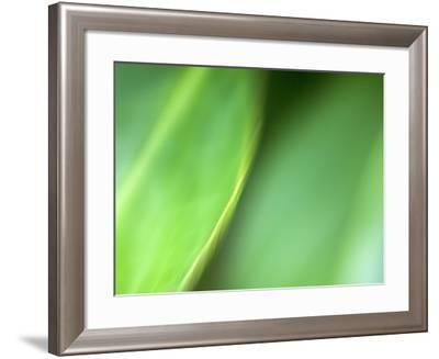 Nature's Green-Doug Chinnery-Framed Photographic Print