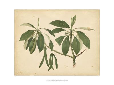 Nature's Greenery IX--Art Print