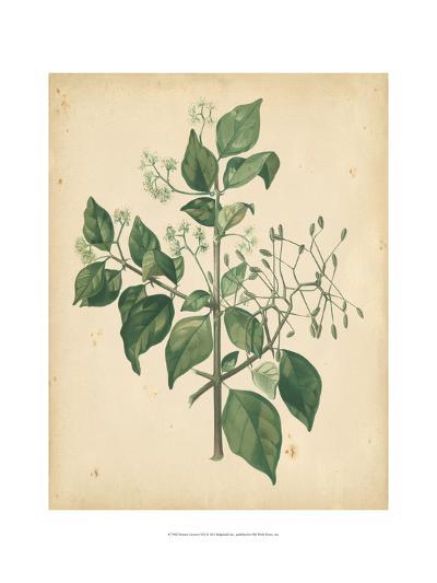 Nature's Greenery VIII--Art Print