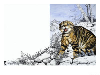 Nature's Kingdom: Hunter of the Highlands - the Wildcat-Susan Cartwright-Giclee Print