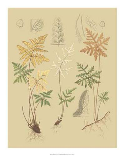 Nature's Lace I-C^e^ Faxon-Giclee Print
