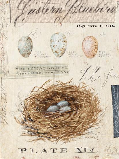 Nature's Nest-Angela Staehling-Art Print