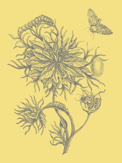Nature's Optimism II-Vision Studio-Art Print
