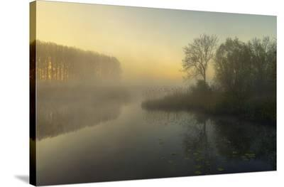 Nature's Painting-Ellen Borggreve-Stretched Canvas Print