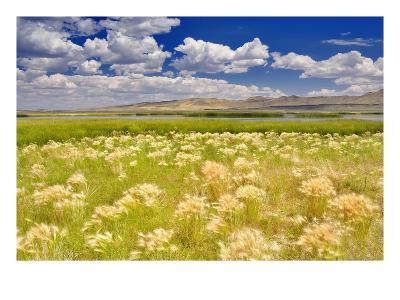 Nature Series 838-PhotoDF-Premium Photographic Print
