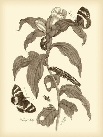 Nature Study in Sepia I-Maria Sibylla Merian-Premium Giclee Print