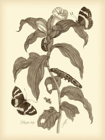 Nature Study in Sepia I-Maria Sibylla Merian-Art Print