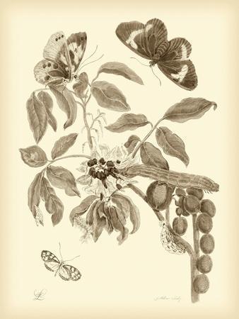 Nature Study in Sepia II-Maria Sibylla Merian-Premium Giclee Print