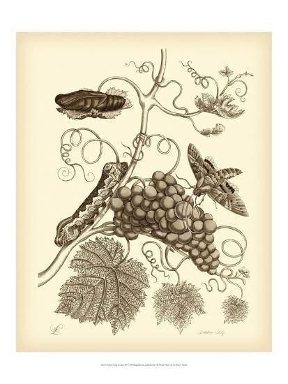 Nature Study in Sepia III-Maria Sibylla Merian-Art Print