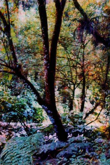Nature-Andr? Burian-Photographic Print