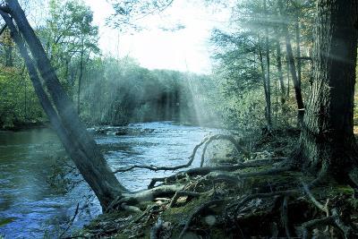 Nature-Mark Ashkenazi-Giclee Print