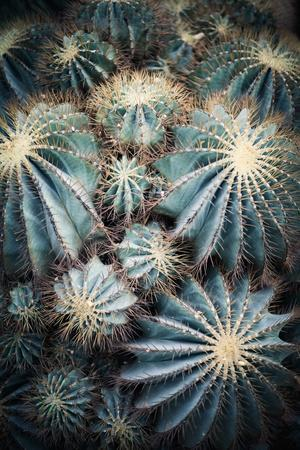 Rustic Macro Shot of Cactus - Tropical Plant with Shallow Depth of Field.Natural Background with Su