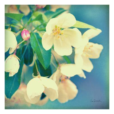 Natures Apple Blossom-Sue Schlabach-Premium Giclee Print