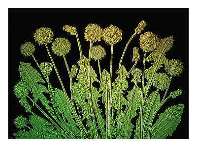 Natures Old Gold-Emiko Aumann-Giclee Print