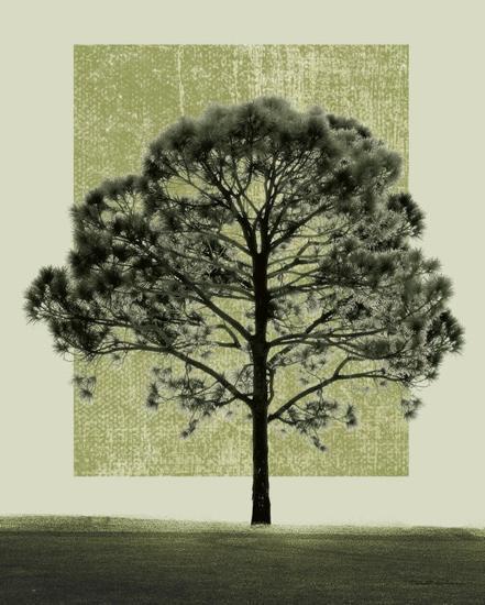 Natures Shapes I-Harold Silverman-Art Print