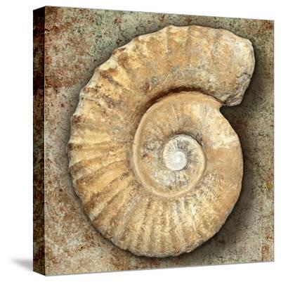 Fossil Spiral Snail Stone Real Ancient Petrified Shell over Limestone